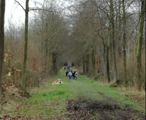 LESDAIN - BALADE EN FORET DE HOWARDRIES-belgique
