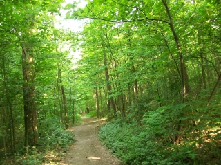 FORET DE MARLY (3)-yvelines