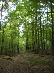 FORET DE MARLY (4)-yvelines